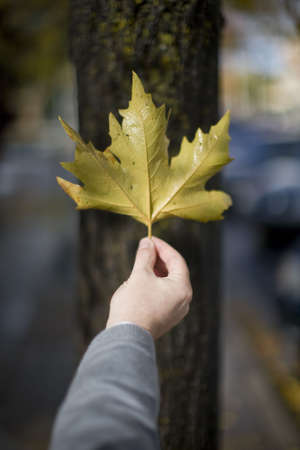 Man holding leaf outside against the bark of a tree to show the single leaf in the air as he holds it up with his hand