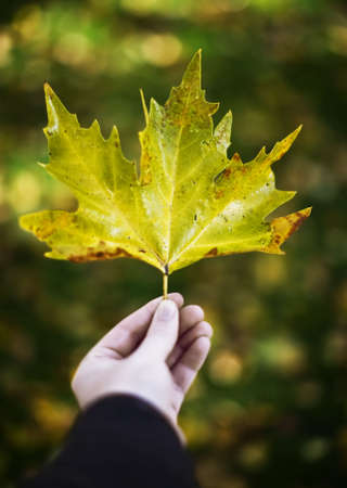 A man holds out a leaf with one hand showing the leaf all alone in the fall with autumn colors of the season Imagens