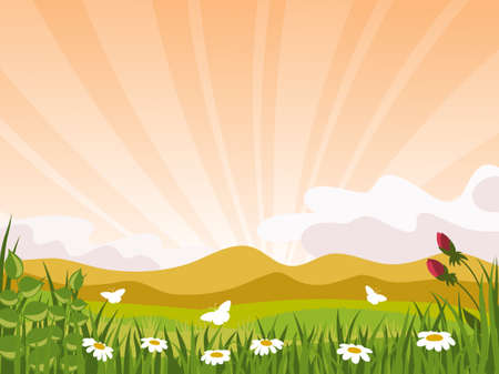 setting sun:  Summer landscape. Flowers and butterflies on the background of the sunset. The sky is covered by the rays of the setting sun.