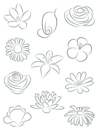 snowdrops: Set of flowers.  illustration.