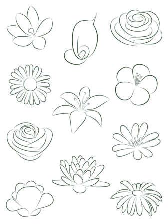 snowdrop: Set of flowers.  illustration.