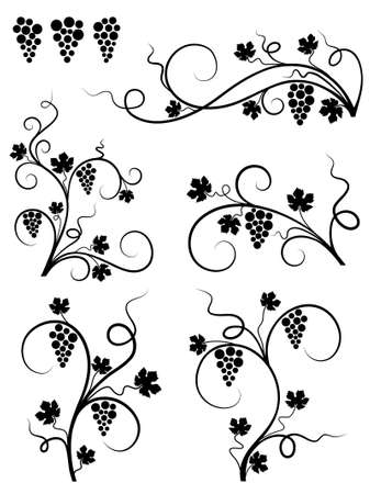 grapes on vine: Grape design elements. Vector illustration.