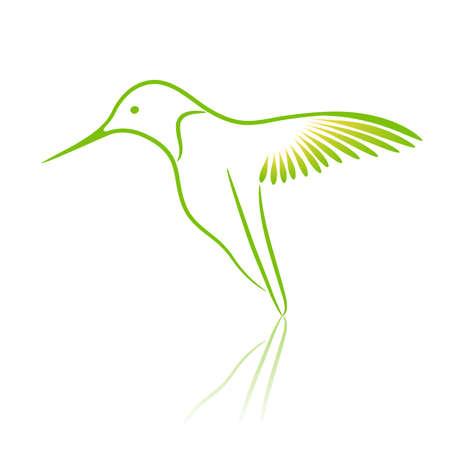 colibries: Colibrí. Ilustración vectorial.