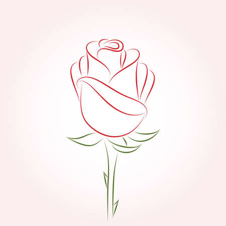Single red rose on a pink background. Vector   illustration.