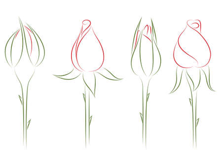 Four drawing buds of roses. 벡터 (일러스트)