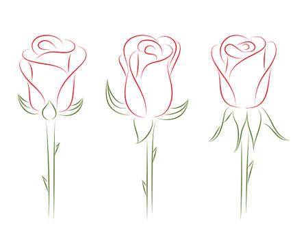 Ensemble de roses.