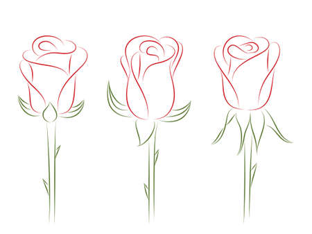 Set of roses. Stock Vector - 9919109
