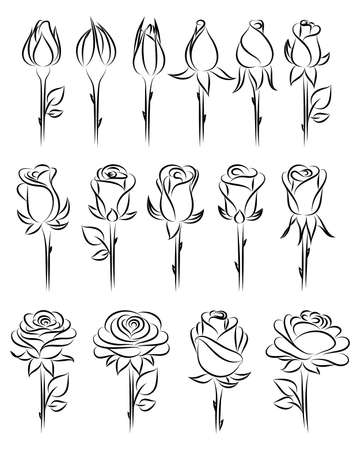rose bud: Set of  hand-drawing  roses. Vector illustration.