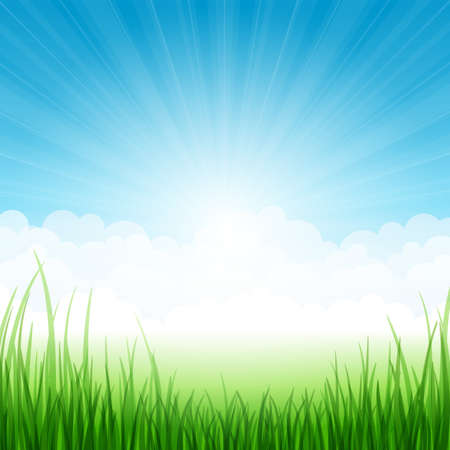 sky and grass: Summer landscape with grass and clouds. Vector illustration. Illustration