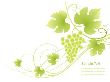 The grape background. illustration. Stock Vector - 9292211