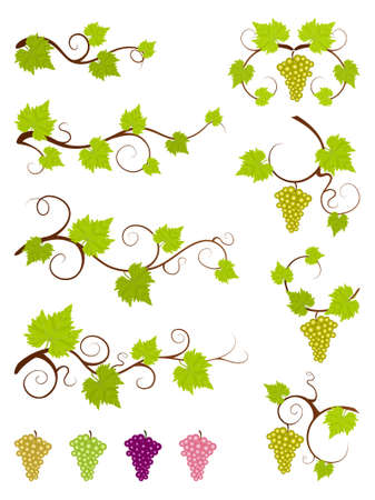 Grape vines set  Illustration