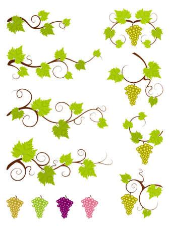 wine making: Grape vines set  Illustration