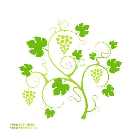 The grape vine background Stock Vector - 9429689