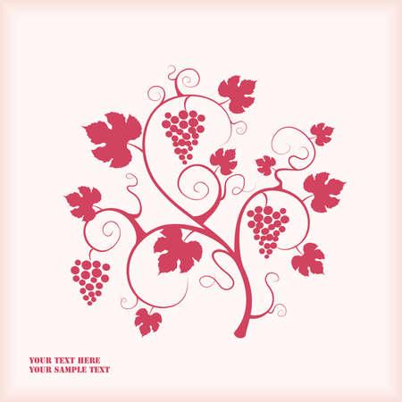 Grape vine.  Illustration
