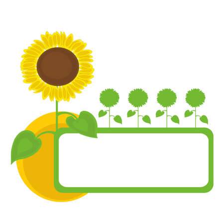 Sunflowers frame design with sun. Vector illustration. Stock Vector - 9423892