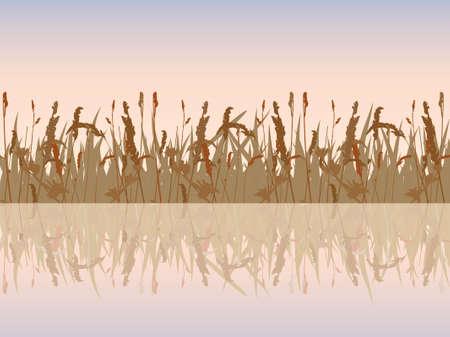 waterside:  The beautiful sunset meadow waterside. Vector illustration. Illustration
