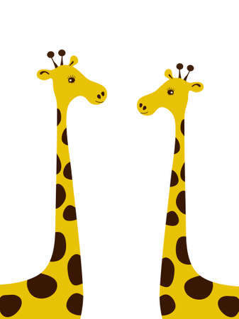 camelopard: Couple of giraffes isolated on the white background.