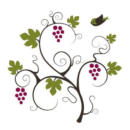 Grape vine and flying bird. Vector illustration.