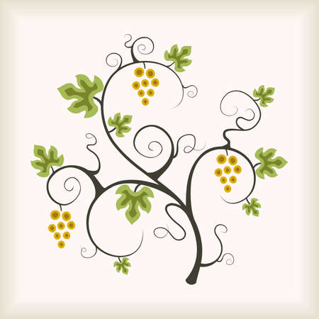 grapes on vine: Beautiful grape vine tree. Vector illustration.