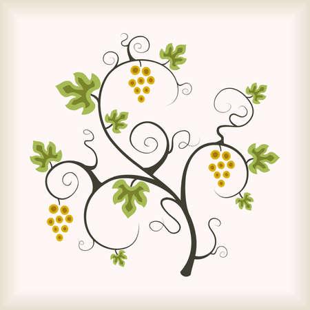 vid: �rbol de vid uva hermoso. Ilustraci�n vectorial.