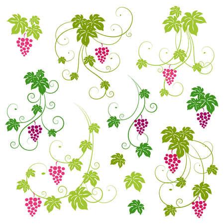 Grape vines design elements set. Vector illustration. Stock Vector - 9398833