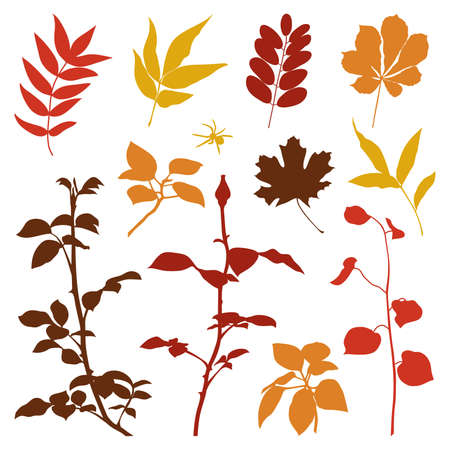 Set of silhouettes of fall plants. Vector illustration.  Vector