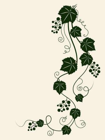 Grape vine silhouette. Vector illustration.  Stock Illustration - 9477581