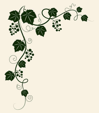 Grape vine silhouette. Vector illustration.  Illustration