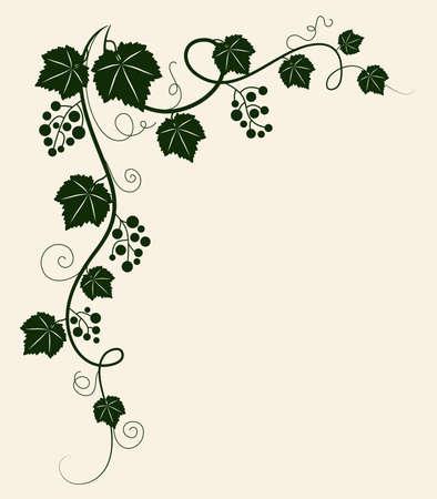 winery: Grape vine silhouette. Vector illustration.  Illustration