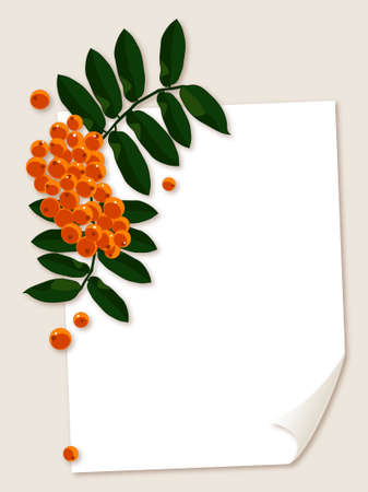 rowan: White paper sheet with rowan berries branch illustration.  Illustration