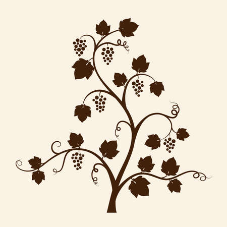 Grape vine silhouette   Stock Vector - 15272882