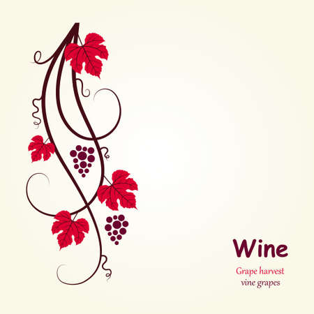 red grape: Decoration grape vine. Vector illustration.