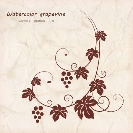 wine  shabby: Grape vine with grunge paper texture background. Vector illustration. Illustration