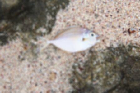 blurred: fish blurred