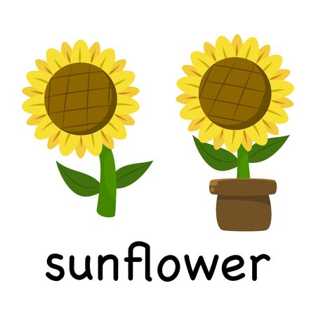 Vector Illustration Cute Cartoon Sunflower isolated on white background , minimal style , Botanical