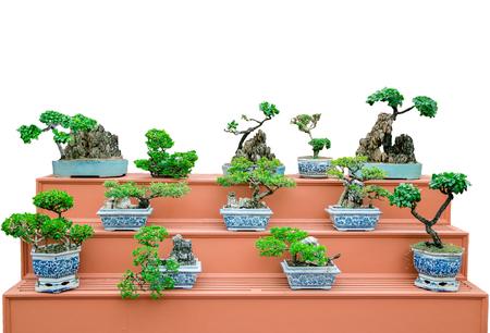 bellissimo albero dei bonsai sugli scaffali con sfondo bianco isolato Archivio Fotografico