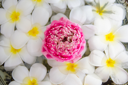 close up of Plumeria spa flowers over  water with pink lotus on top view, focus on lotus