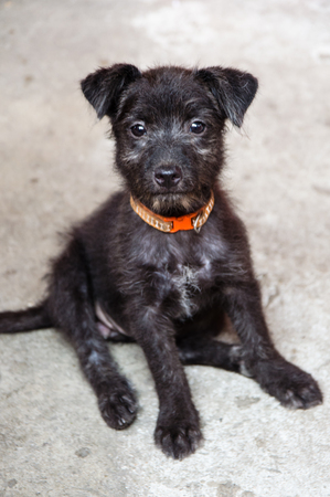 black puppy sitting with red collar