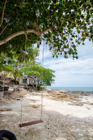 swing hang on tree on beach