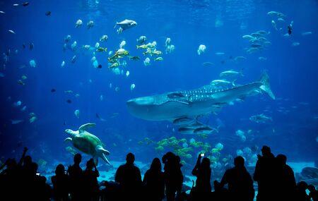 sylwetka ludzi w wielkim akwarium