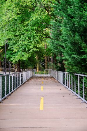 cement walkway across green forest