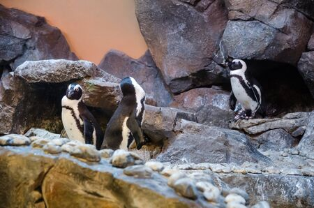 penguin with stone environment in zoo Stock Photo
