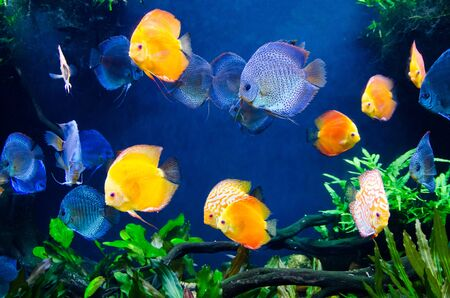 colorful of coral reef fish with tree and plant ecosystem