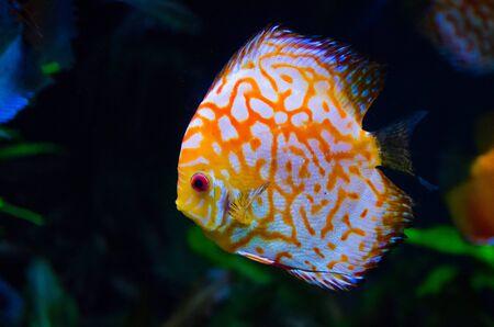 coral reef fish in dark background