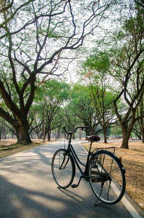 black vintage bicycle is parking on road in tree park