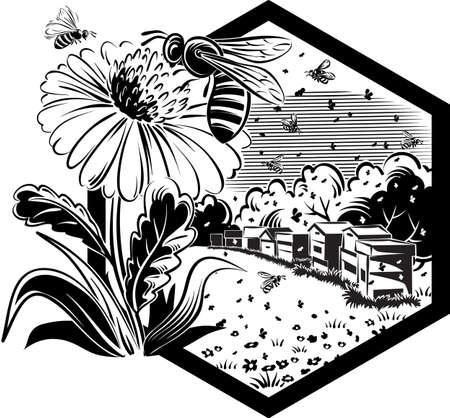 花の花風景、蕁麻疹や労働者ミツバチの六角形フレーム。  イラスト・ベクター素材