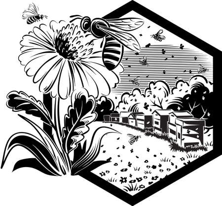 Hexagon frame with flowery scenery, hives, and worker bees on flowers. Illustration