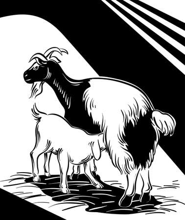 suckling: Goat suckling her puppy in the barn.