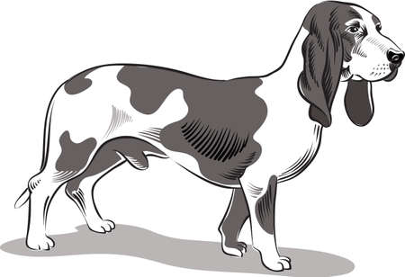 lupus: Male dog breed Bassets, in a landscape