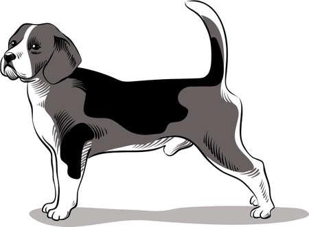 lupus: Beagle dog breed, in a landscape Illustration